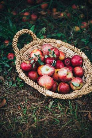 apple picking aesthetic