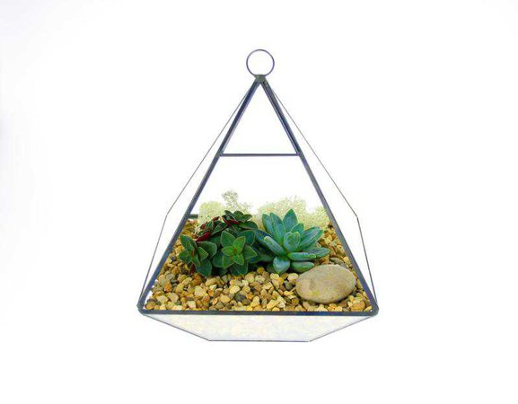 Angled Glass Bowl Terrarium Kit with Miniature Succulent Plants | Gift – The Art of Succulents