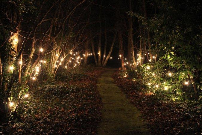 forest light – Google Kereső