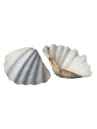 seashell 6(?)