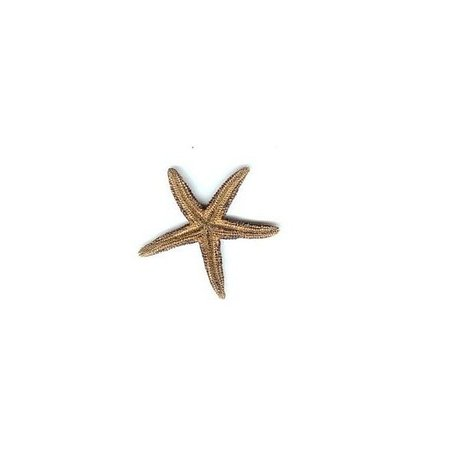 sea star png