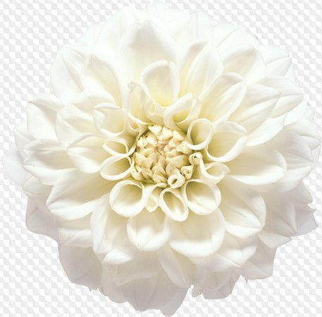flower png - Google Search