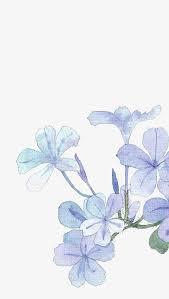 light blue flowers png