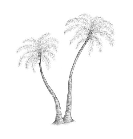 palms trees drawing - Google Search