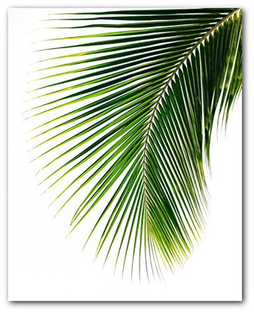 Amazon.com: Palm Leaf Print, Abstract Tropical Leaf, 8 x 10 Inches, Unframed: Handmade