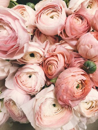 Close-up Photograph of Flowers · Free Stock Photo
