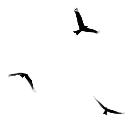 Stock Pictures: Silhouettes of birds in flight - Clip Art Library