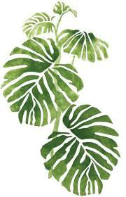 plant drawings philodendren - Google Search