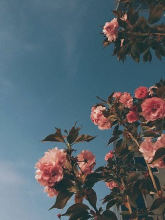 pink flowers aesthetic
