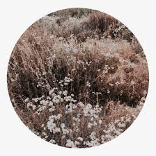 brown aesthetic photo - Google Search