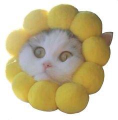 polyvore filler cat flower png