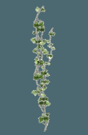 Green Vines Garden pngs