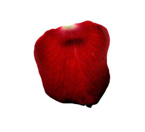 red flower png filler