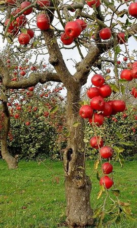 apple orchard aesthetic