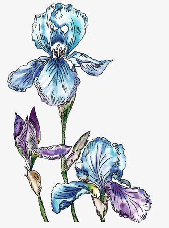 Hand-painted Blue Flower Decoration Background, Hand Painted, Watercolor, Blue PNG and PSD File for Free Download