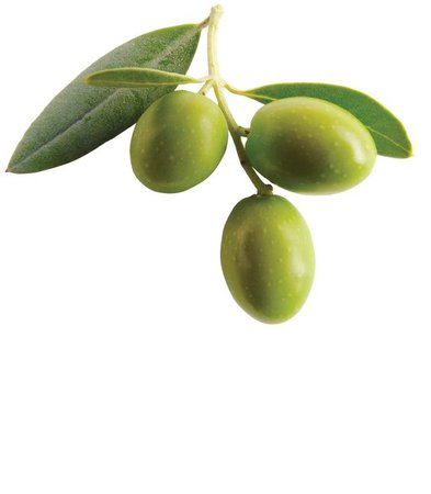 olive green png filler