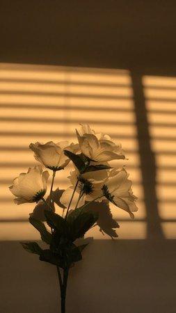 cream aesthetic flower light window