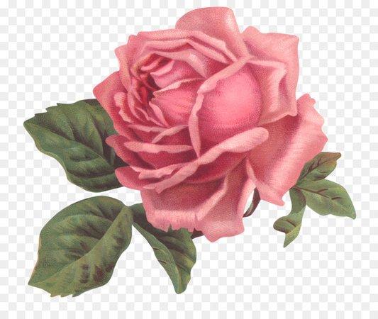 Vintage clothing Flower Rose - Shabby png download - 1600*1350 - Free Transparent Pink png Download.