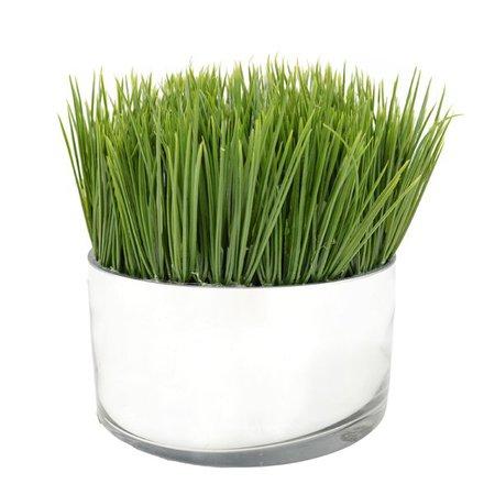 Mercury Row Desktop Foliage Grass in Cylinder Pot & Reviews | Wayfair