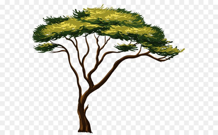 African trees - Google Search