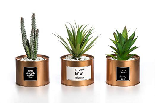 Amazon.com - Opps Mini Artificial Plants Plastic Green Grass Cactus with Special Golden Can Pot Design for Home Décor - Set of 3 -