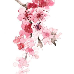 Cherry Blossom Branch Watercolor Art Print Painting Painting by Joanna Szmerdt