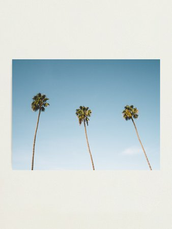 """""""Three Palm Trees Blue Sky California"""" Photographic Print by TravelDream 