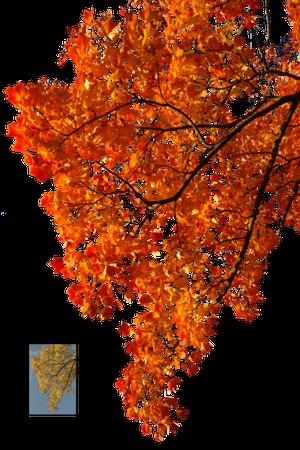 Autumn, Spring, Winter, Seasons, Leaf, Png - 5876 - TransparentPNG