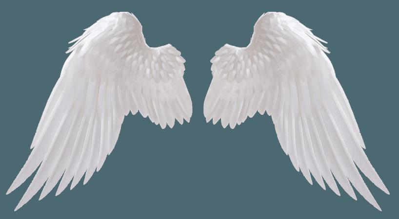 ~Angel Wings~