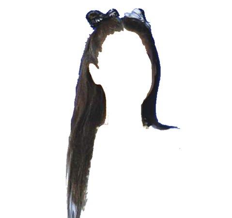 Brown hair w/ space buns