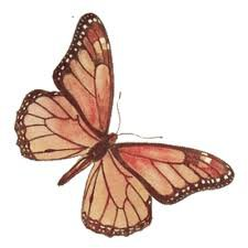 butterfly clipart - Google Search