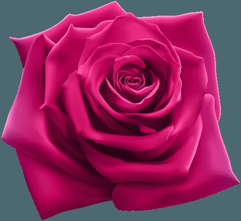 Magenta-Pink Rose (Icon Supplies)