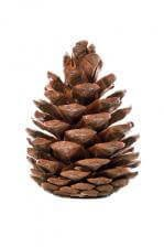 Pinecones: Nature's Free Home Décor