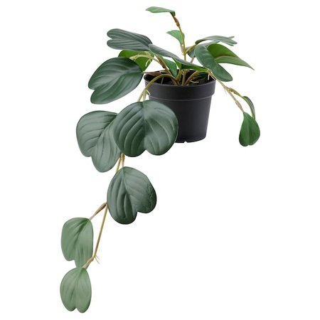 FEJKA Artificial potted plant - indoor/outdoor hanging, Peperomia - IKEA