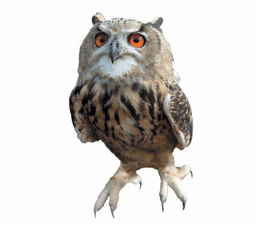 harry potter owl transparent