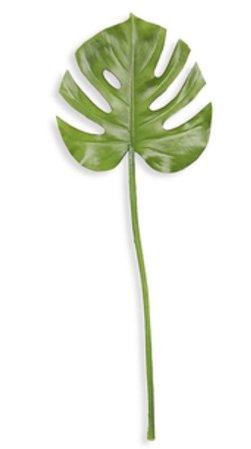 palm plant stem