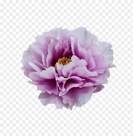 purple-flower-transparency-11552506190g7an7s9zv1.png (840×859)