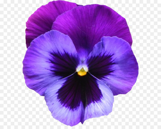 Purple Flower Clipart (Icon Supplies)