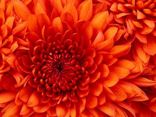Big Bright Orange Flower