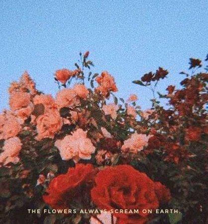 the flowers always scream on earth (wowitsjessica)
