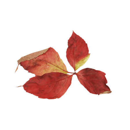 fall art element