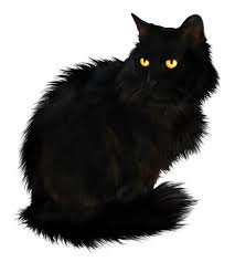 Google Image Result for https://png2.kisspng.com/20180420/kcq/kisspng-persian-cat-british-longhair-kitten-black-cat-long-haired-5ad9c12b1ee9a6.7141273715242202031266.png