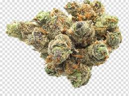 weed bud transparent - Google Search