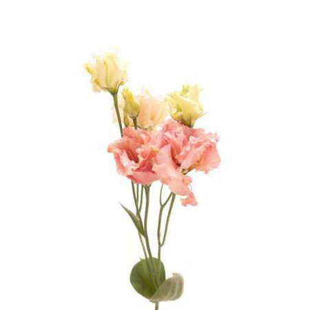 Peach Lisianthus - Lisianthus - Types of Flowers | Flower Muse
