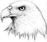 eagle head drawing bw - Google-Suche