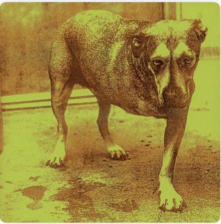 Alice In Chains self titled album three legged dog