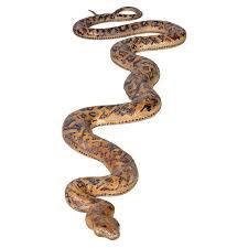 snake statue - Google Search