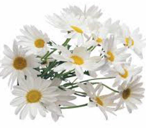 white daisy bundle