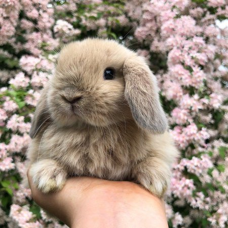 bunny pink flowers