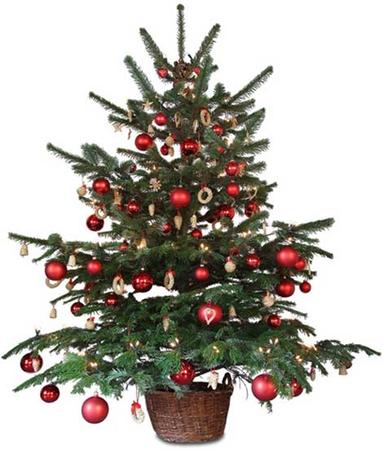 A Little Christmas Tree / recipesvideo.info